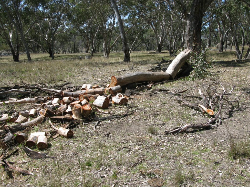Dead tree on the ground partly cut for firewood