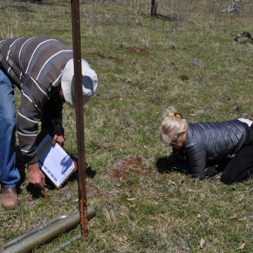 Volunteers counting bugs as part of a biodiversity study