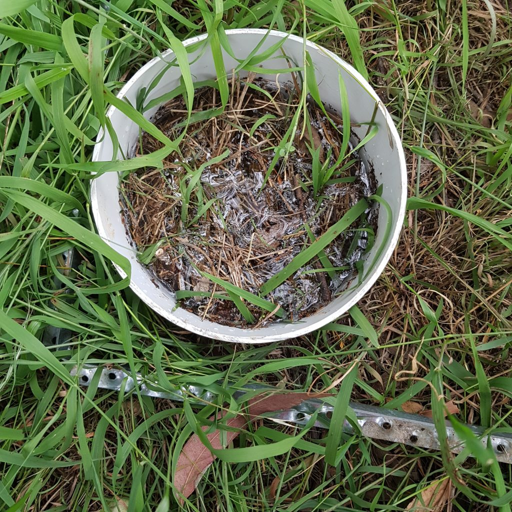 Infiltration measurement: using a piece of PVC pipe, measure how long it takes for 500ml of water to enter the soil.