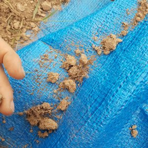 Measurement of root volume: Take 10 aggregates from the 10 cm level and 20 cm level of sample and check for the presence of roots.
